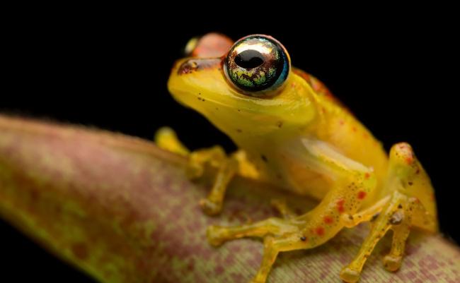 Обои картинки фото животные, лягушки, лягушка, фон, природа