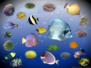 обоя рыбки, 3д, графика, animals, животные