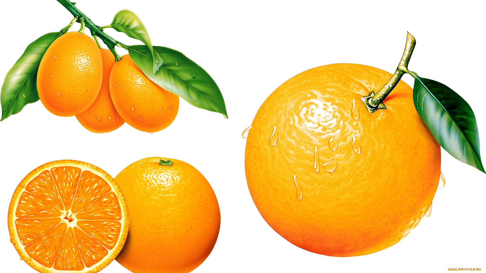 Предметная картинка апельсин