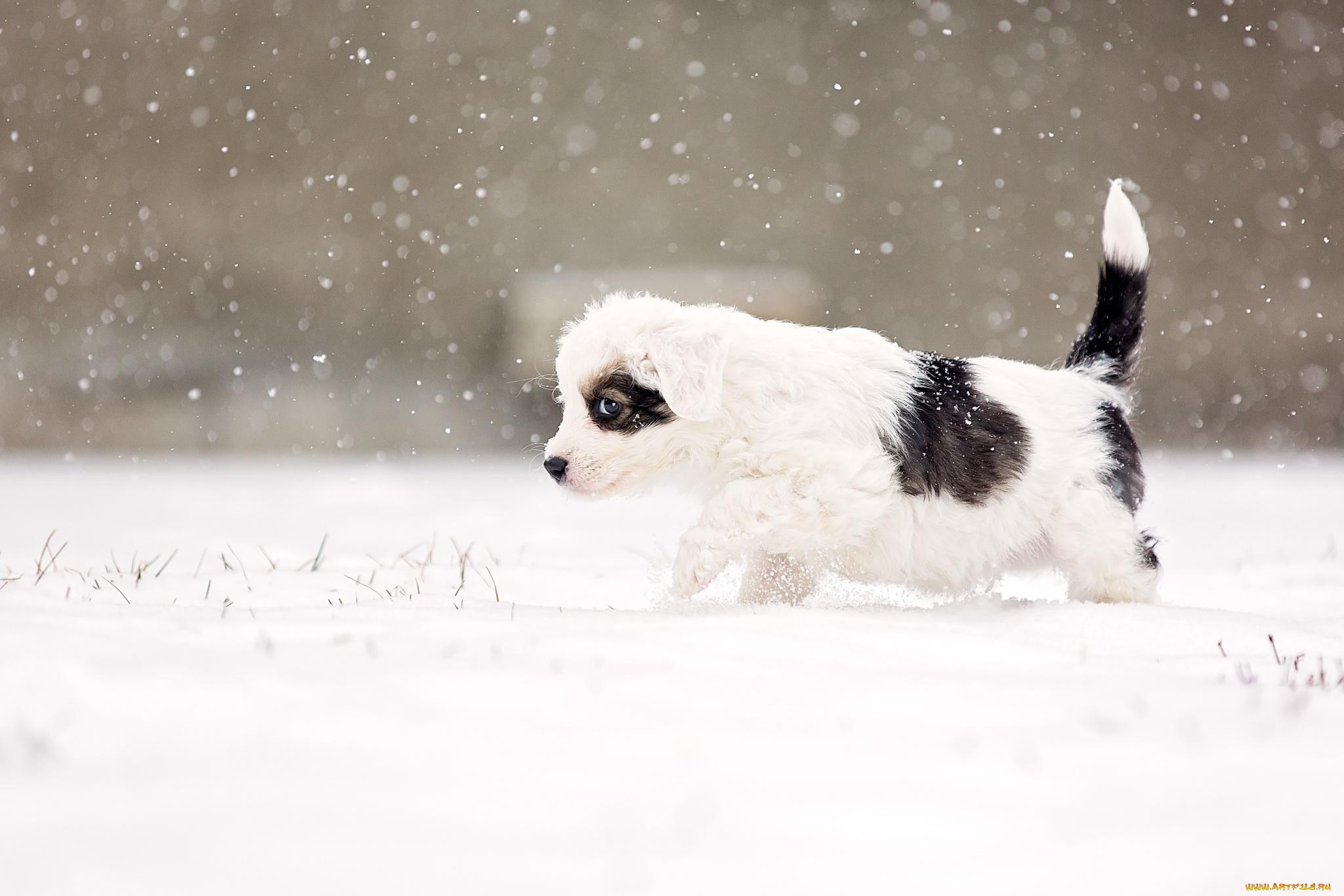 щенок снег puppy snow  № 2001690  скачать