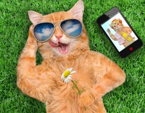 обоя юмор и приколы, трава, цветок, очки, смартфон, рыжий