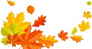 обоя векторная графика, природа , nature, осень, листья, фон