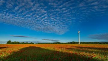 обоя разное, мельницы, поле, цветы