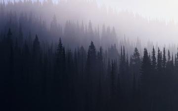 Картинка 3д+графика природа+ nature туман ели лес деревья