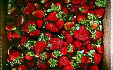 обоя еда, клубника,  земляника, много, ягоды, спелая