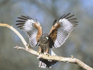 Картинка животные птицы хищники