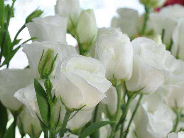 https://i.artfile.me/wallpaper/13-09-2009/627x470/cvety-eustoma-429424.jpg