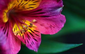 обоя цветы, макро, цветок, цвет
