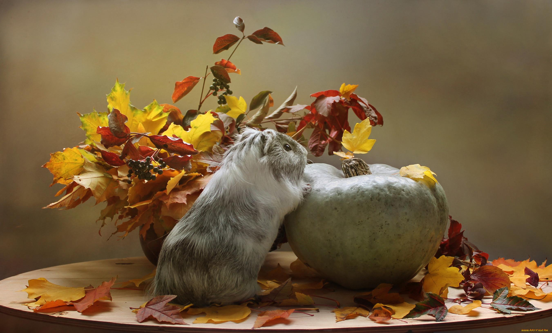 animals loving autumn 40 pics lovethesepics
