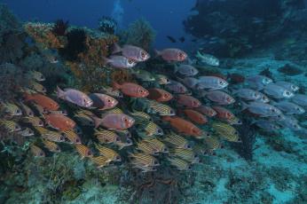 обоя животные, рыбы, море, морские, глубины, рыбка