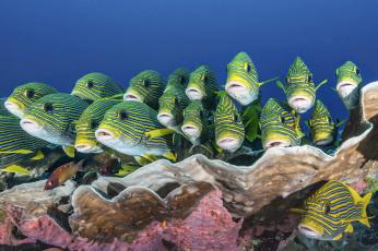 обоя животные, рыбы, морские, глубины, море, рыбки