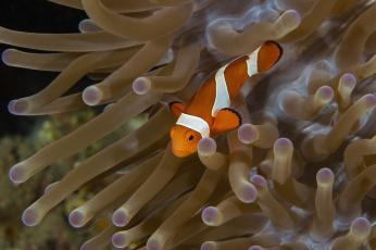 обоя животные, рыбы, морское, дно, морские, глубины, рыбка, бело-оранжевая