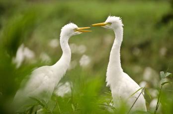 обоя животные, птицы, природа, зелень