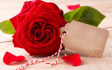 обоя праздничные, день святого валентина,  сердечки,  любовь, flowers, red, розы, romantic, roses, valentine`s, day, love, heart, бутоны, красные