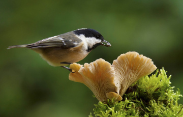 обоя животные, птицы, птица, окрас, перья, клюв