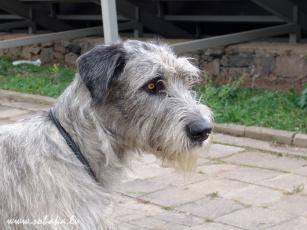 Картинка животные собаки