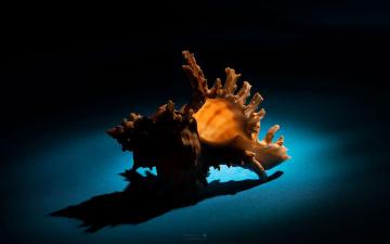 Картинка разное ракушки кораллы декоративные spa камни