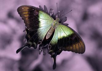 Картинка животные бабочки цветок бабочка