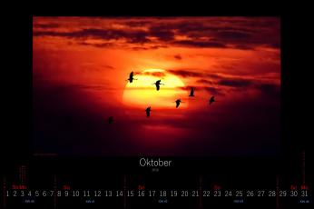 обоя календари, животные, 2016, птицы, закат, октябрь