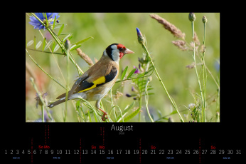 обоя календари, животные, цветы, луг, птица, август, 2016