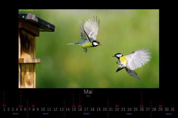 обоя календари, животные, пара, синицы, май, птицы, 2016