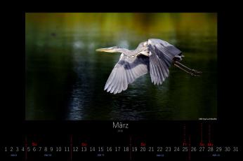 обоя календари, животные, птица, март, 2016, летит, цапля