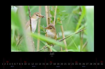 обоя календари, животные, птицы, июль, 2016