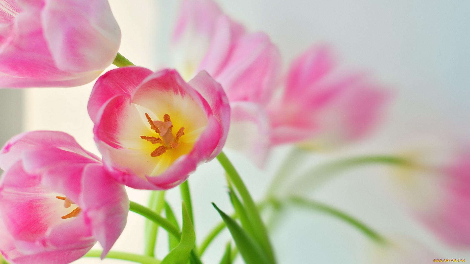 С 8 марта картинки нежные цветы, картинках
