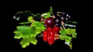 обоя еда, фрукты,  ягоды, смородина, крыжовник