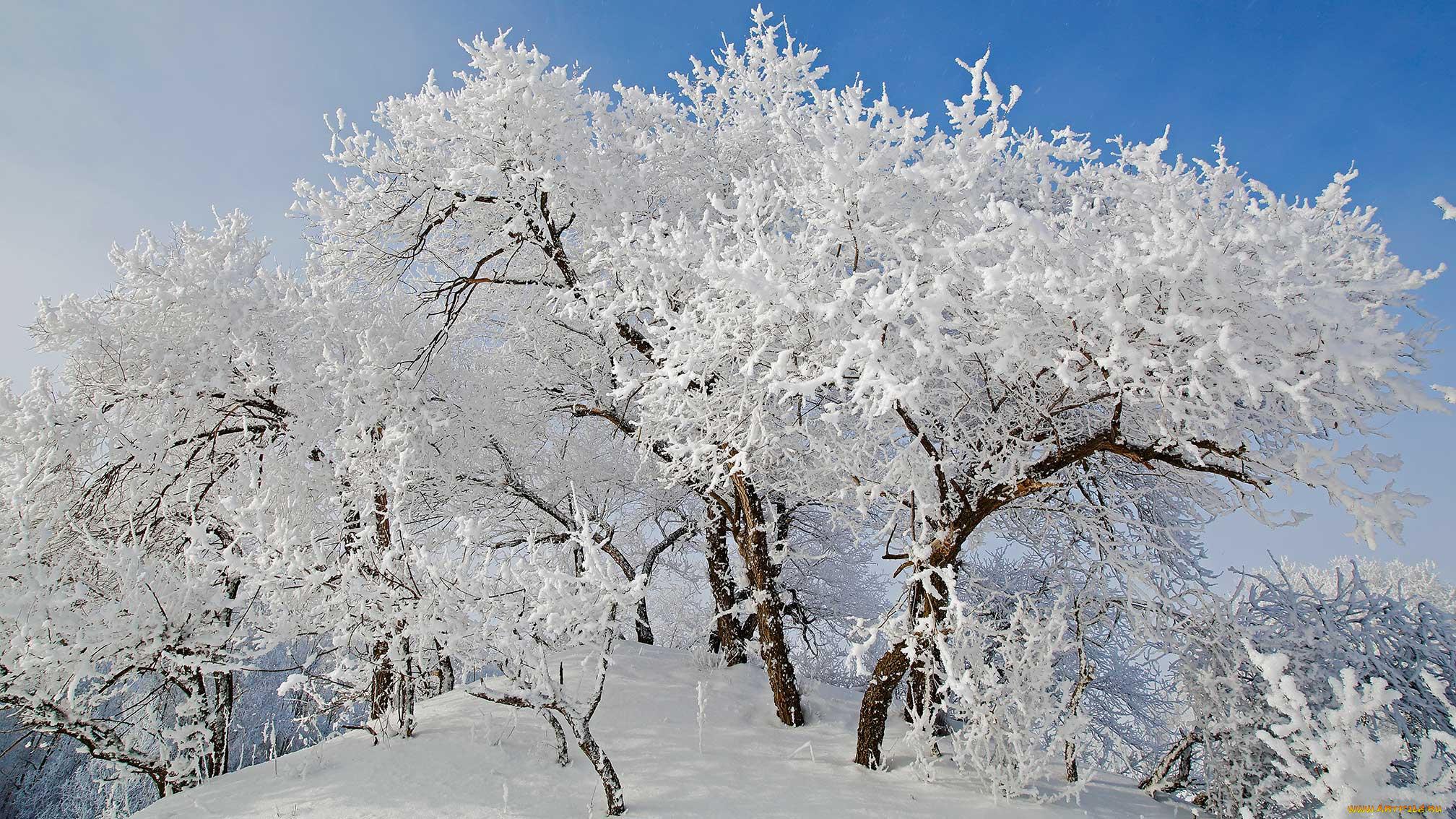 Деревья в инее  № 1191592 бесплатно