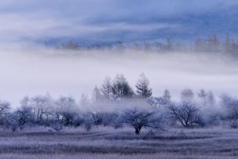 Картинка природа пейзажи трава поле иней лес туман деревья