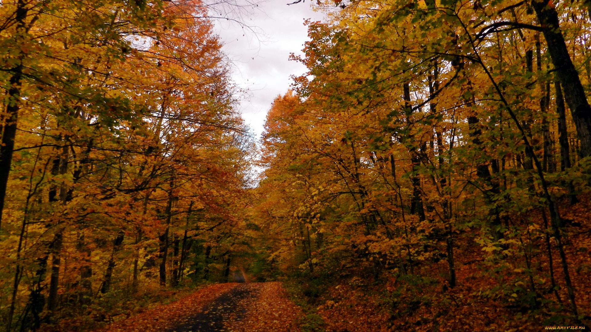 дорога, осень, деревья, листопад без регистрации