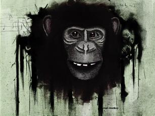 обоя monkey, рисованные, животные, обезьяны