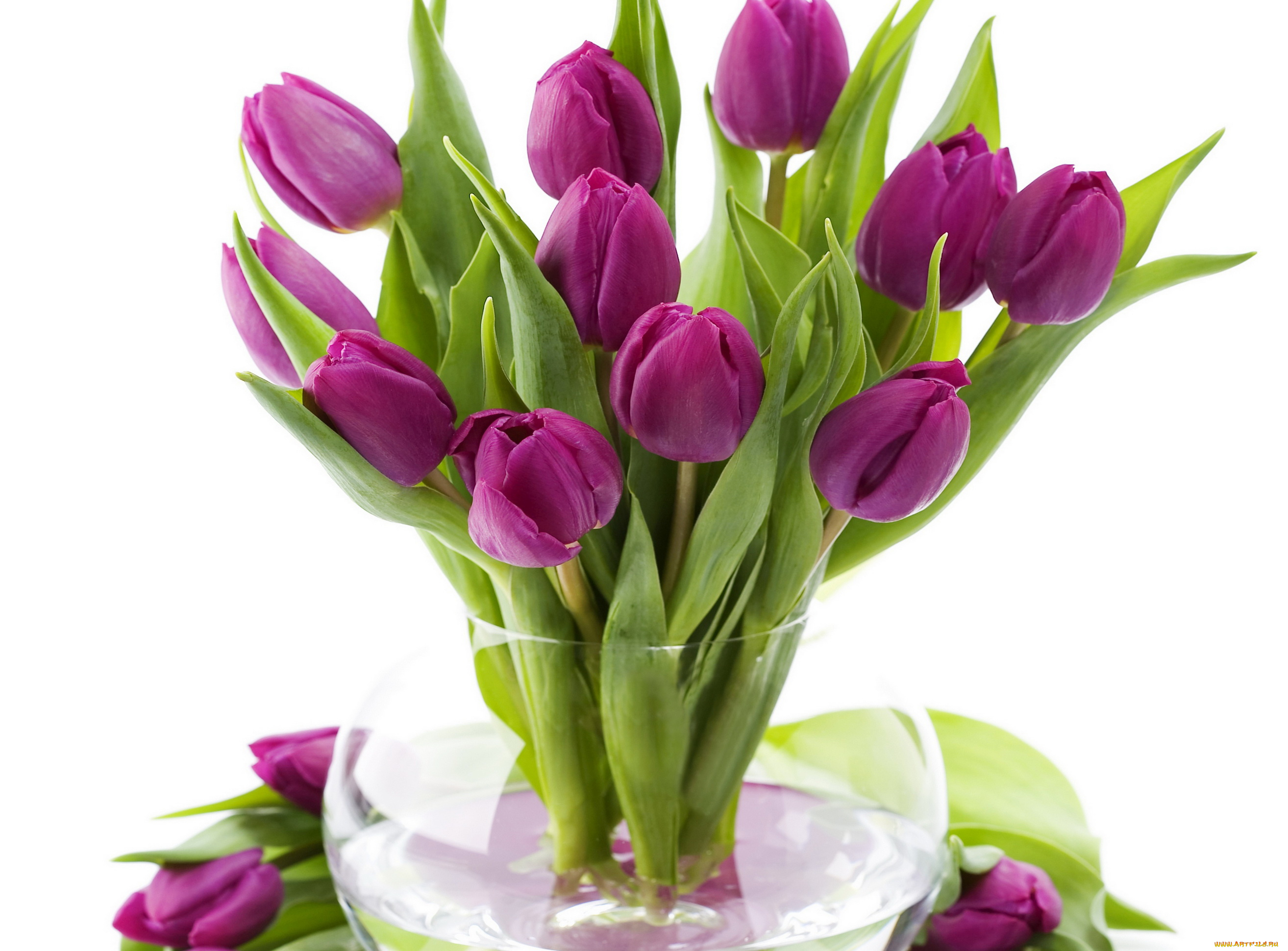 Открытки с днем рождения цветы тюльпаны, глухонемых прикольные картинки