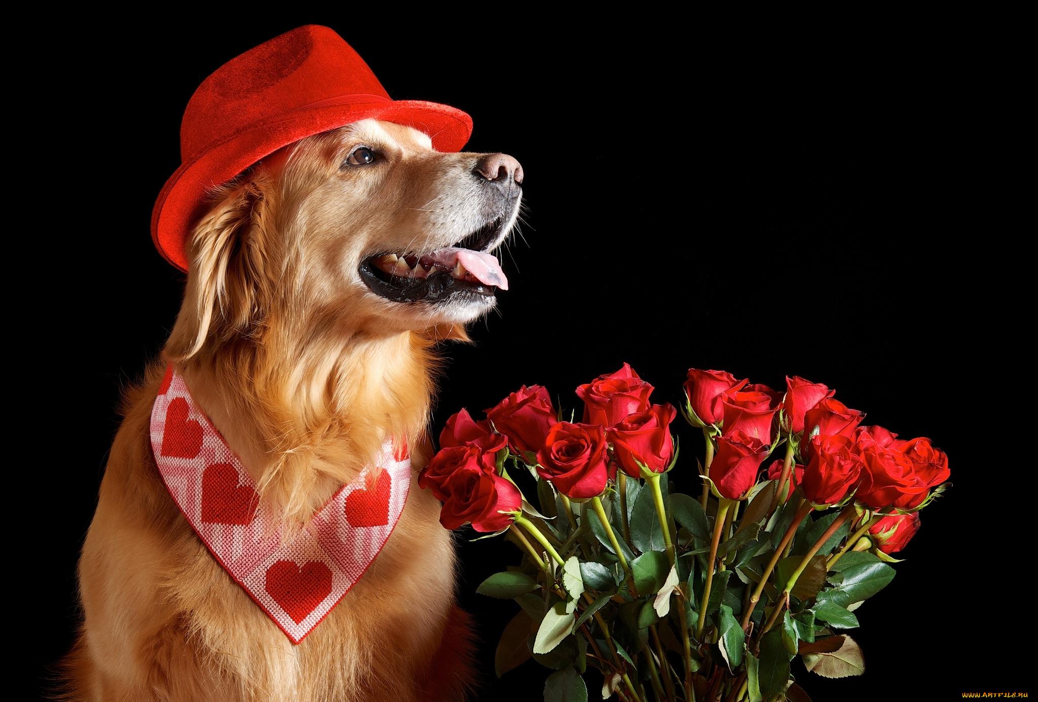 розы картинки с собаками шаги обратном пути