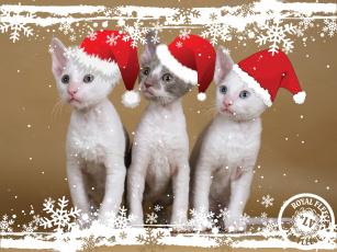 Картинка животные коты котята