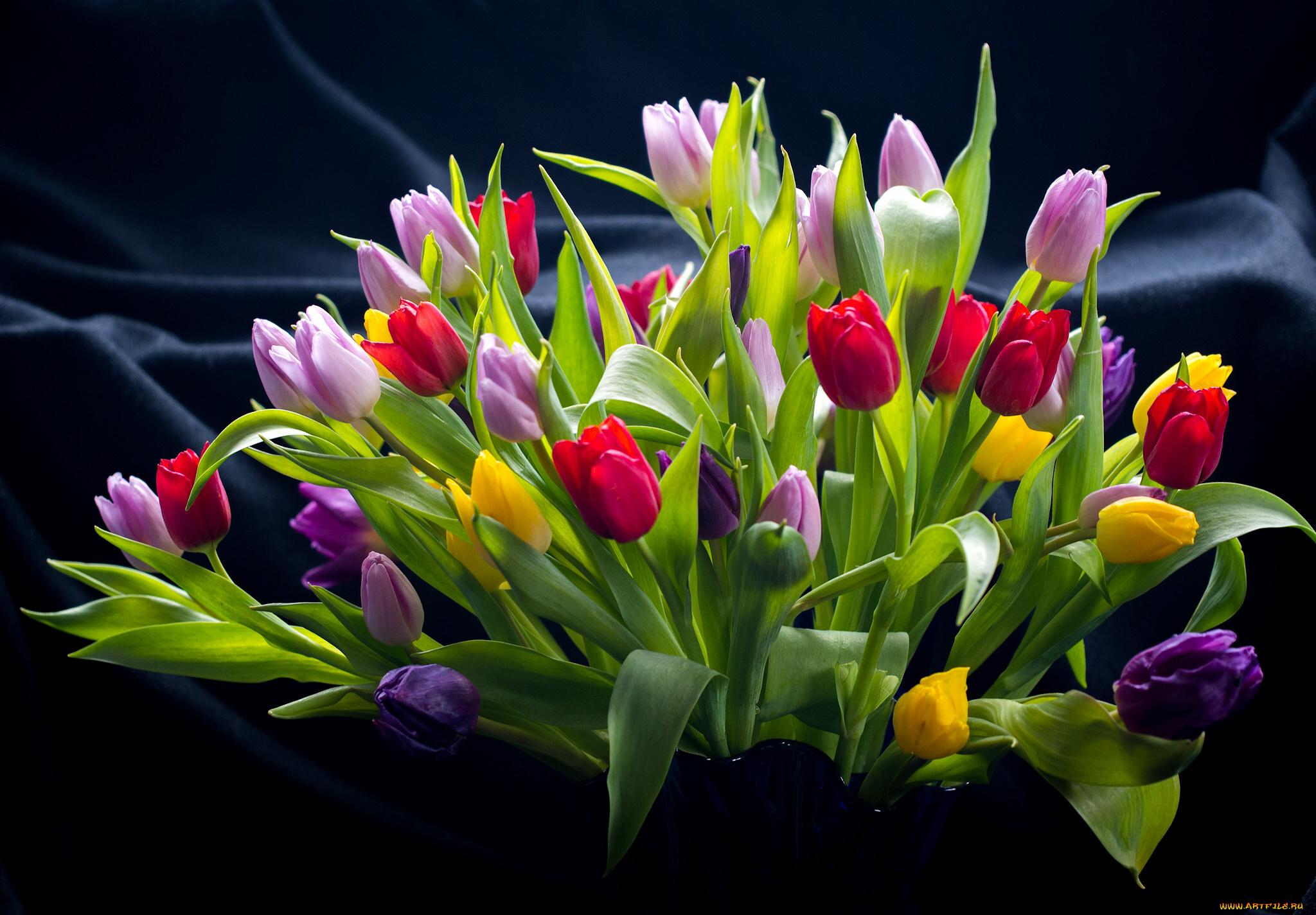 Дню пионерии, открытки цветами тюльпаны