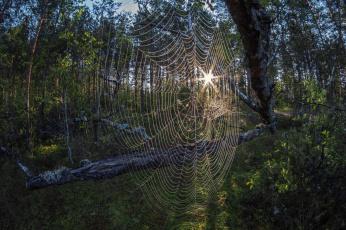 Паутина в лесу без смс