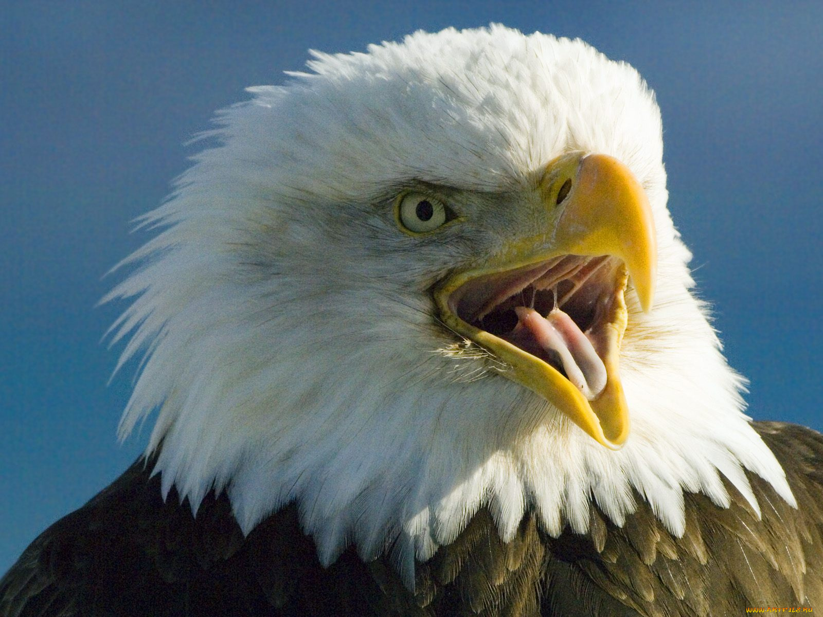 Картинка почему орла изображают в профиль