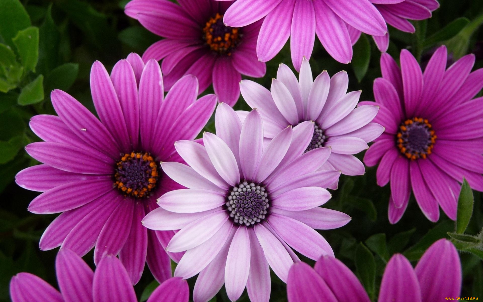 Самые красивые цветы в мире + очень много фото