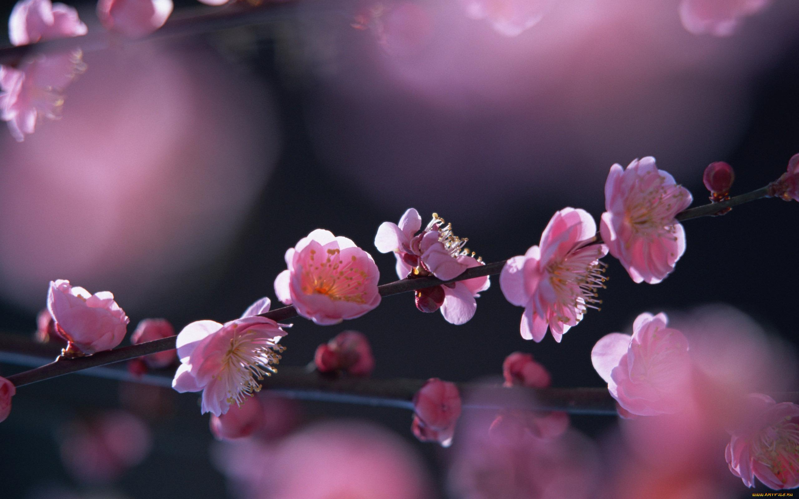 Днем, весна цветы картинки красивые