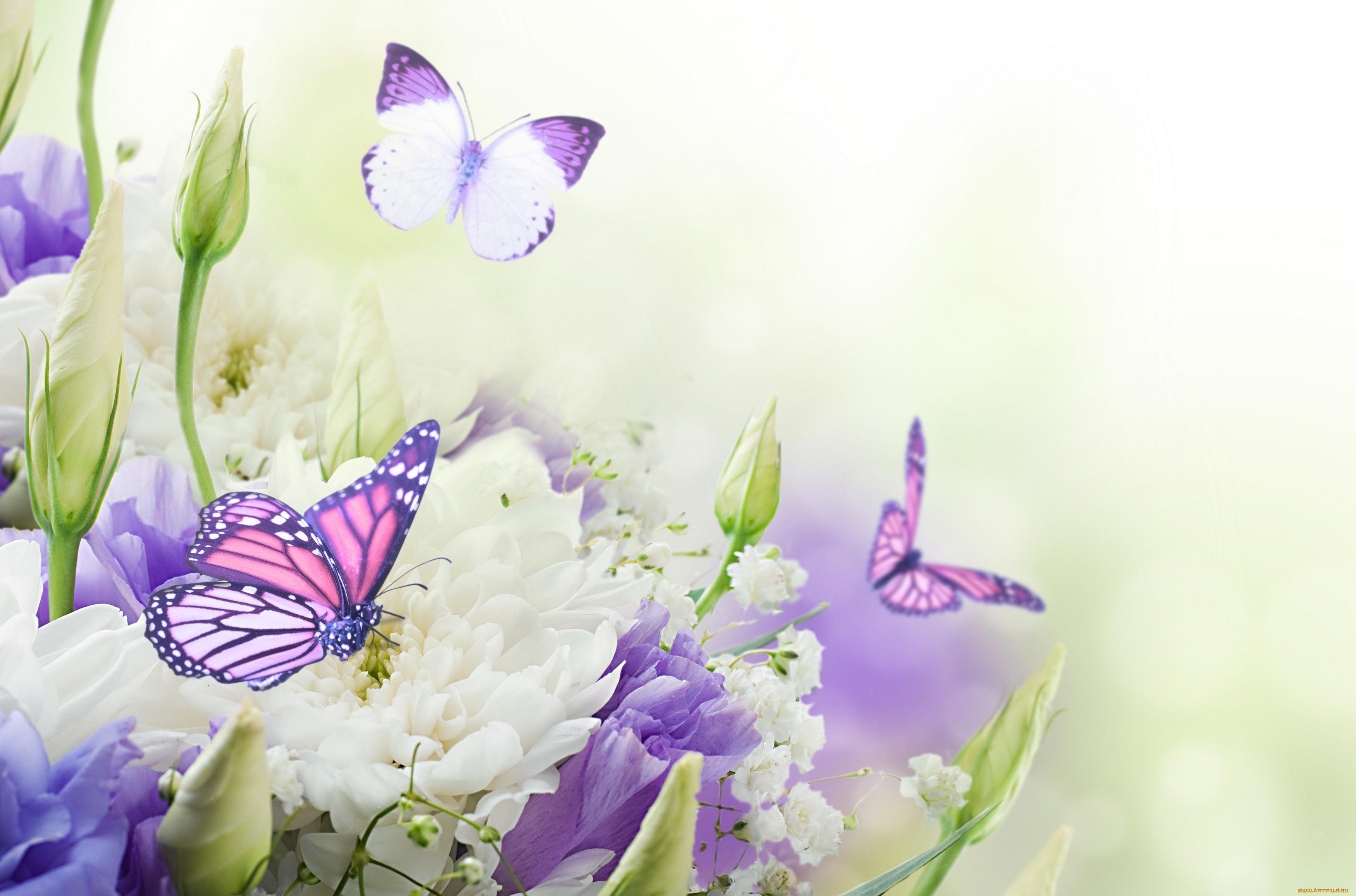 Открытка с красивыми цветами и с бабочкой, утро маша