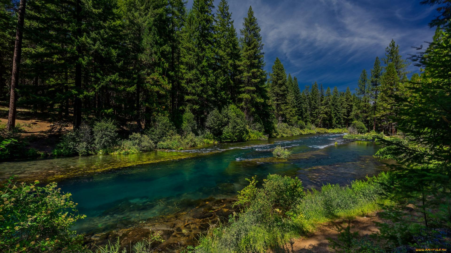 Река у леса картинки