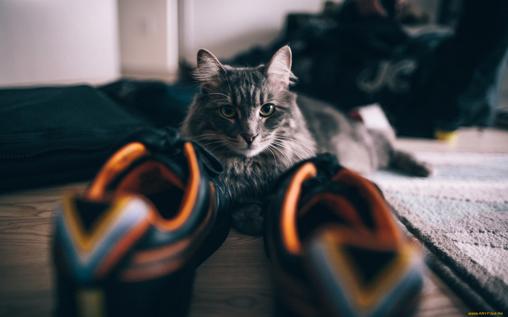 котенок в ботинке  № 2016519 бесплатно