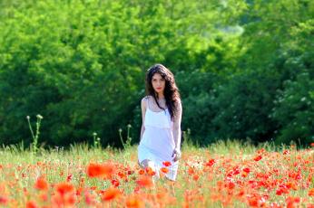 обоя девушки, -unsort , брюнетки, темноволосые, девушка, шатенка, поле, цветы, маки