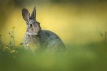 обоя животные, кролики,  зайцы, фон, цветы, трава, ушки, кролик