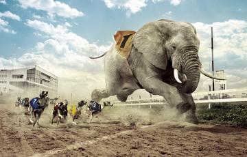 Картинка юмор приколы забег собаки слон