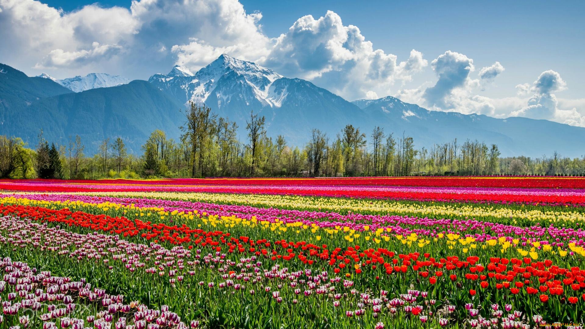 удивительно, если смотреть картинки с пейзажем и цветами положение