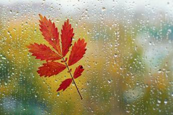 Картинка разное капли брызги всплески листья стекло