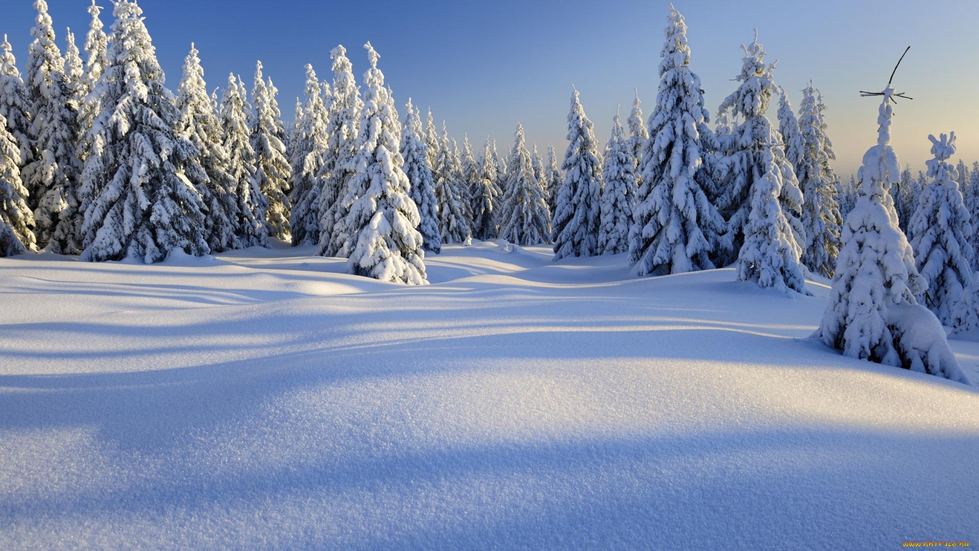 снег зима ели snow winter ate подборки